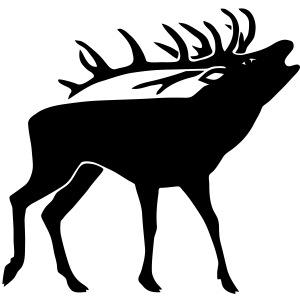 stag night deer antler buck cervine