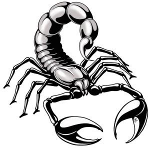 scorpion - silver - grey