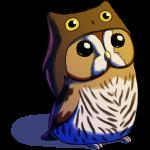 Lomadia - Little Owl