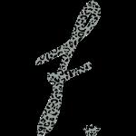 f_cheetah