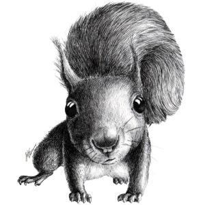 Cute Curious Squirrel