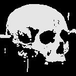 c13_skull_vector