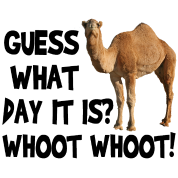 Hump Day Camel Whoot Whoot!