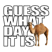 Hump Day Camel Guess What Day It Is
