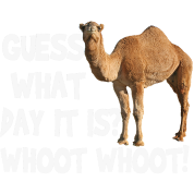 Hump Day Camel Guess What Day It Is (white)