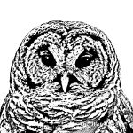 mr_owl_dec_2013e