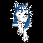 STUCK Husky Blue (front)