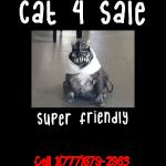 cat4sale2nobg