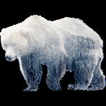 otrg_bear