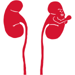 Kidney Punch Vector