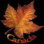 Canada Maple Leaf Art Souvenirs T-shirts Apparel