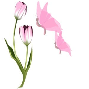 Pink Tulip and Pink Butterflies