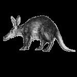Aardvark X