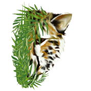 Cheeta and Grass