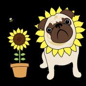 Sunflower Pug