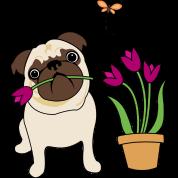 Tulip Pug