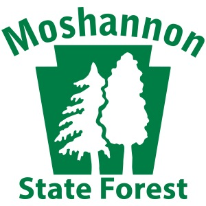 Moshannon State Forest Keystone (w/trees)