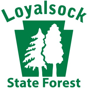 Loyalsock State Forest Keystone (w/trees)