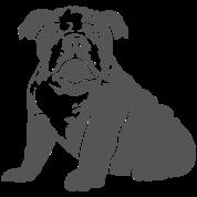 bulldog_puppy_v1_1c