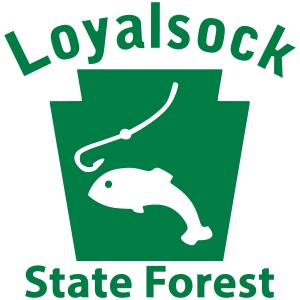Loyalsock State Forest Fishing Keystone PA