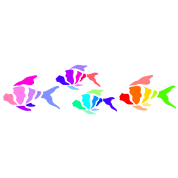 Colorful fish (dark shirts)