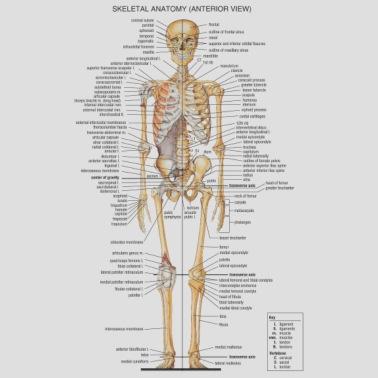 Anatomy by SlickandHisRuin | Spreadshirt