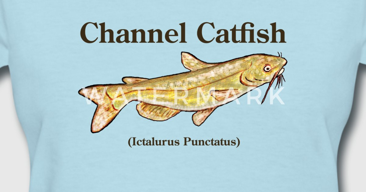 Channel Catfish By Room4me Spreadshirt