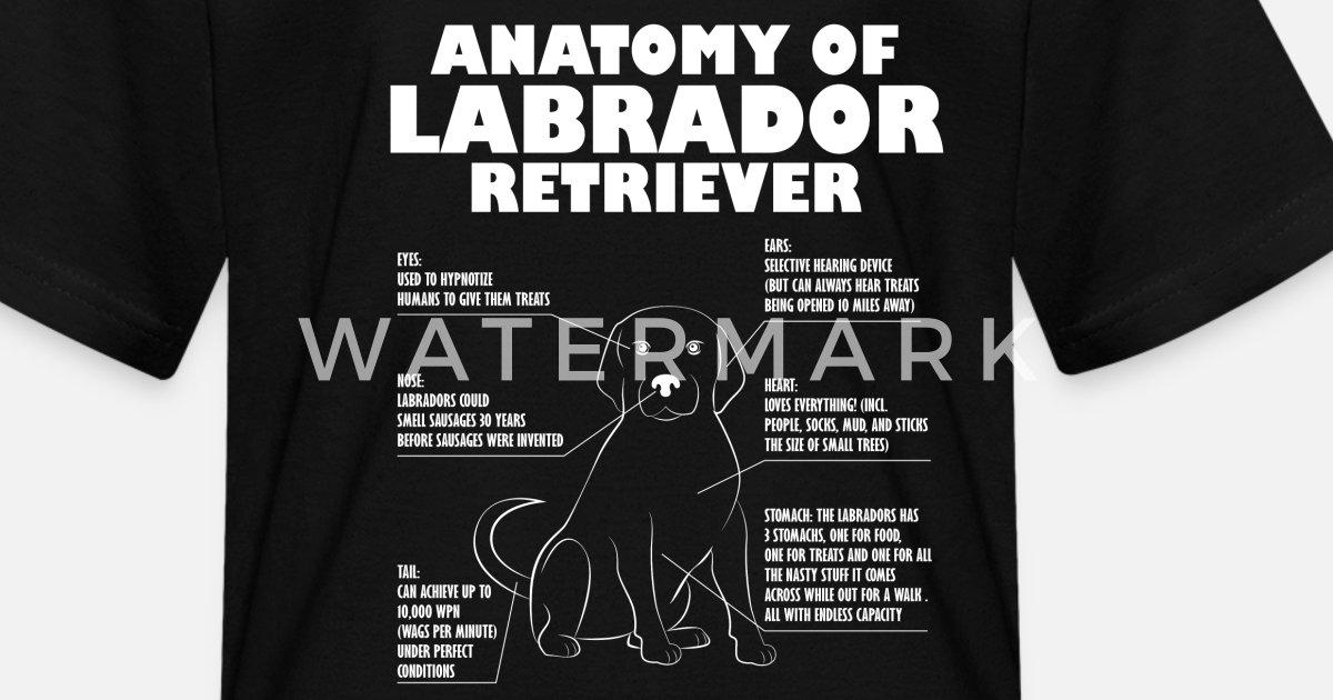 1d80722e Labrador Retriever Anatomy Funny Dog owner Gift Kids' T-Shirt | Spreadshirt