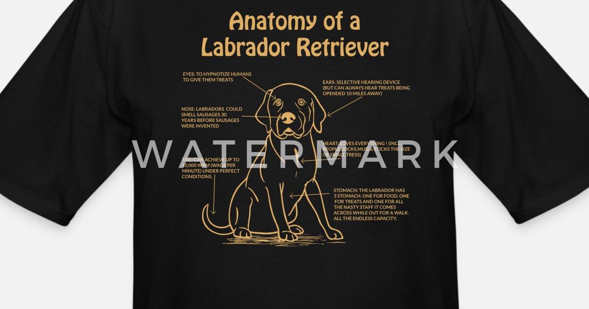 e5706498 Anatomy of a Labrador Retriever Lab Owner graphic Men's Tall T-Shirt |  Spreadshirt