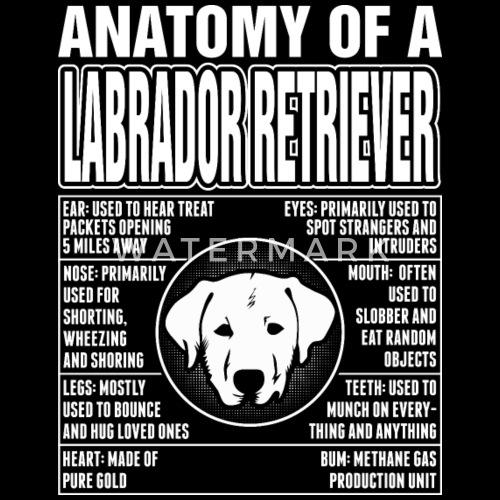 Anatomy Of A Labrador Retriever By Pamolakouhei111 Spreadshirt