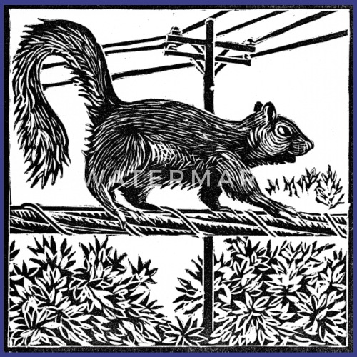 Squirrel Linocut Mens Premium T Shirt