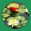Water Lily Pond in Autumn - Women's Premium T-Shirt