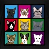 3x3 cat heads - Kids' Premium T-Shirt