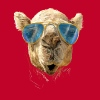 Camel with sunglasses - Women's Premium Tank Top