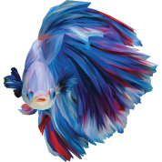 blue betta fish by suyi spreadshirt