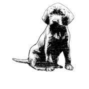 Pudelpointer Sitting Dog Sketch Cute Memorial Gift Women S Premium T Shirt Spreadshirt