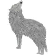 White Wolf Howling Drawing Design Men S T Shirt Spreadshirt