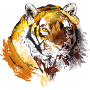 colorfuli llustration head tiger