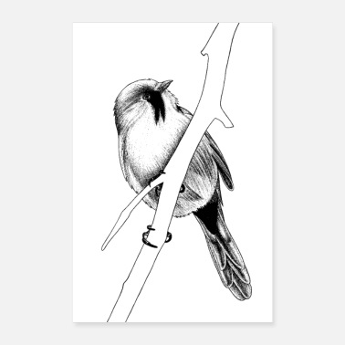 Illustration Bearded reedling - ink illustration - Poster 8 x 12