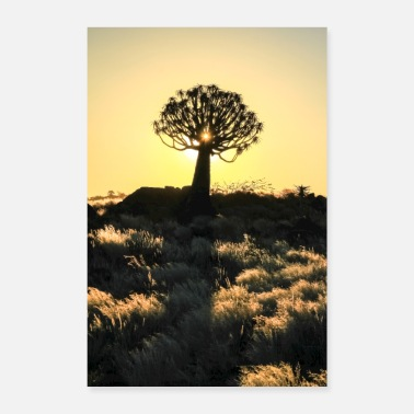 Namibia Beautiful african sunset with silhouetted Quiver t - Poster