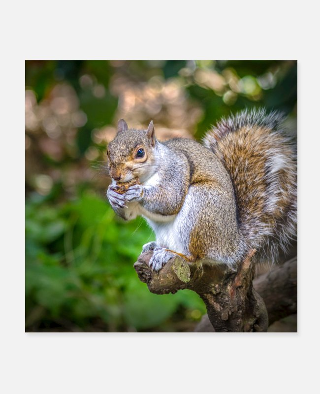 Nature Conservation Posters - Squirrel - Posters white