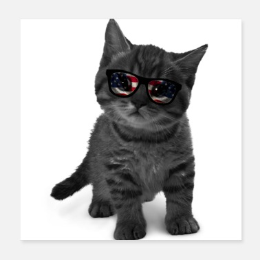 Sunglasses cat with sunglasses - Poster