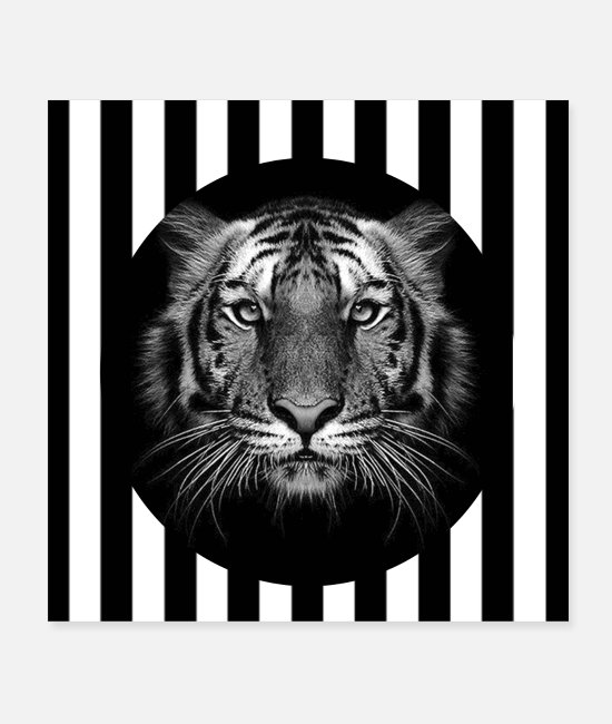 Wild Cat Posters - Tiger - Posters white