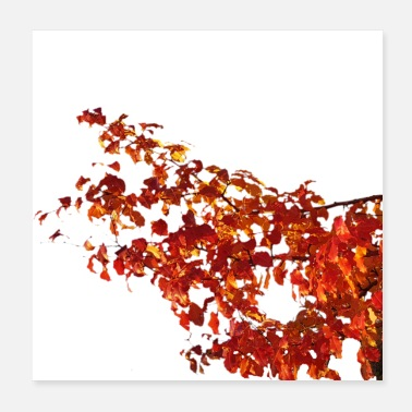 Fall fall leaves - Poster