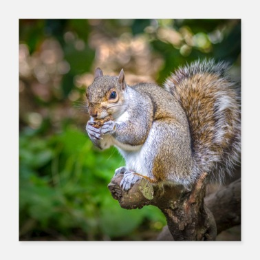 Grey Squirrel - Poster 16x16