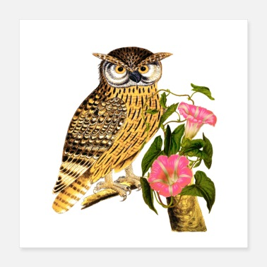 Night Owl cute blind night owl - Poster