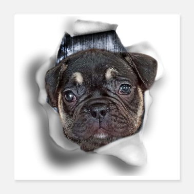 Bulldog Puppy Funny french bulldog puppy in a hole made of paper - Poster