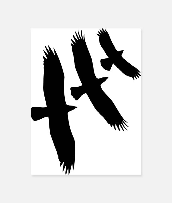 Mountains Posters - Vulture, Eagle, Buzzard - Three Flying Birds Gift - Poster white