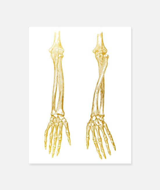 Golden Art Posters - Arm Bones - Poster white