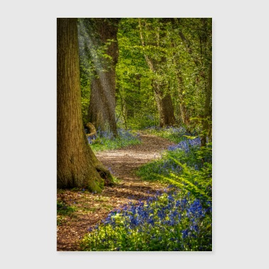 Bluebell Walk - Poster 24x36